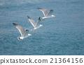 海鷗 禽 鷗 21364156