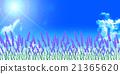 lavander, lavender, herb 21365620