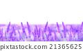lavander, lavender, herb 21365625