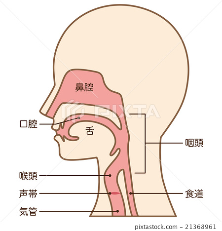 throat, singing voice, cross-section diagram 21368961
