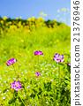 黃芪屬植物 中國紫雲英 蓮花 21376946