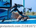 海豚 海豚表演 水族館 21381672