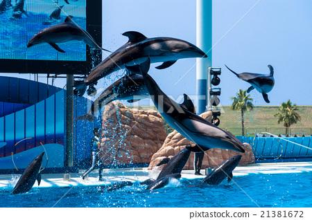 海豚表演 21381672