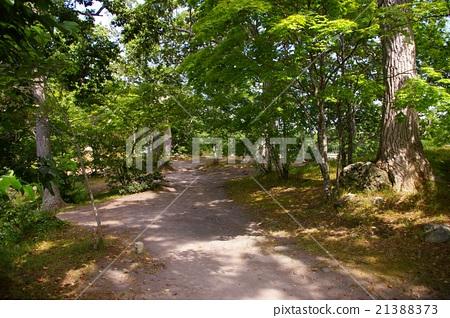 Lakeshore of Onuma 21388373