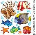coral reef fish 21389226