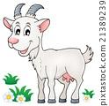 Goat theme image 1 21389239