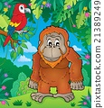 Orangutan theme image 2 21389249