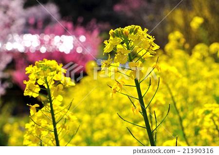 花朵 花卉 花 21390316