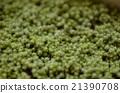 moss, plant, vegetative 21390708