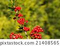 植物 植物學 植物的 21408565