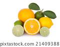 fresh orange,citrus fruits,lemon 21409388