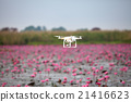 Drone aircraft  hovering on lake of pink lotus. 21416623