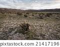 cactus, desert, wilderness 21417196