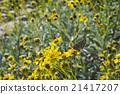butterfly, desert, plant 21417207