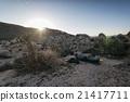 Joshua Tree National Park, California 21417711