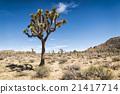 Joshua Tree National Park, California 21417714