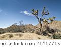 Joshua Tree National Park, California 21417715