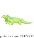 iguana, vector, cartoon 21422933