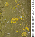 Tree bark with lichens vector texture 21423821