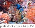 海底的 海裡 海 21435351