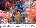海底的 海裡 海 21435352