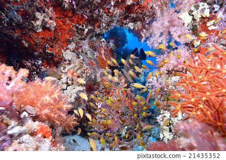 海底的 海里 海洋 21435352