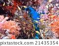 海底的 海裡 海 21435354