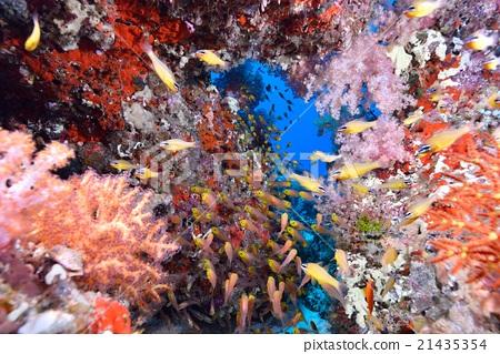 海底的 海里 海洋 21435354