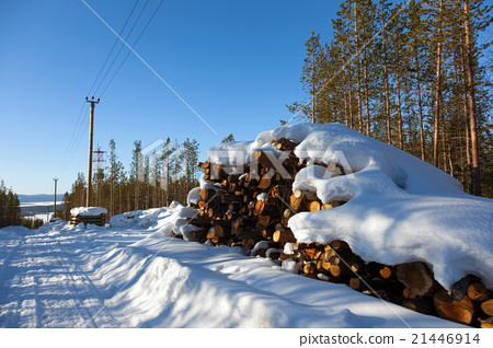 Deforestation in the clearing of power line 21446914
