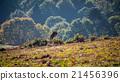 Red Deer Jumping 21456396