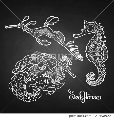 Graphic vector Seahorse collection 21458922