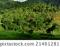 bali, country, countryside 21461281