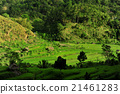 bali, country, countryside 21461283