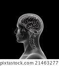 大腦 頭腦 頭 21463277