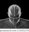 大腦 頭腦 頭 21463279