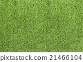 Large Green Grass texture 21466104