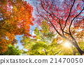 Colorful autunm treetops. 21470050