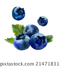 Watercolor blueberry isolated 21471831
