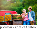 Senior couple harvesting apples, standing at 21478647
