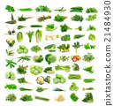 Vegetables collection isolated on white background 21484930