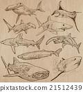 Sharks - An hand drawn vector pack 21512439