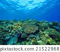 珊瑚 海 大海 21522968