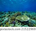 珊瑚 海 大海 21522969