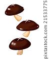 shiitake mushroom, shitake, mushroom 21533775