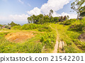 Traditional Toraja village in idyllic landscape 21542201