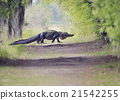 Alligator Crossing Trail 21542255