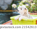 Puppy bathing 21542613