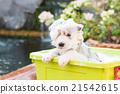Puppy bathing 21542615