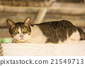 cute cat on nature background 21549713
