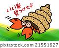寄居蟹 節肢動物 甲殼動物 21551927